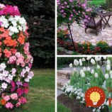 Expert poradil úžasné nápady, ako pestovať kvety v záhrade: Vyskúšajte to a budú sa pri nej všetci s úžasom pristavovať!