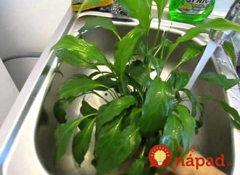 """Táto rastlina dokáže vyliečiť """"choré budovy"""" a nemusíte si ju takmer vôbec všímať: Dôvod, prečo by ste ju mali mať doma aj v práci!"""