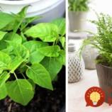 Ušetrite za elektrinu: Dajte si do bytu tieto rastliny a oni vám ochladia vzduch počas letných horúčav!