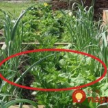 Schéma pre maximálny výnos: Keď vysadíte plodiny takto, ušetríte priestor, čas aj peniaze za postreky proti škodcom!