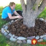 Chystáte sa do lesa? Nazbierajte si šišky, v záhrade vám perfektne poslúžia a ochránia vaše rastlinky!