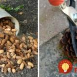 Muž zbieral celé mesiace šišky v lese: Keď susedia videli čo z nich vyrába, nechápali, že im to nenapadlo skôr!