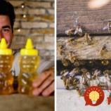 Slovák z včelárskej rodiny prezradil jednoduchý trik: Takto vždy rozlíšite poctivý med od falošného!