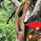 Stačila jediná búrka a strom na záhrade bol zničený: Muž vzal pílu a všetci čakali, že len odprace drevo, on ale urobil niečo úžasné!