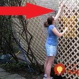 Títo ľudia sa hanbili za škaredý plot na svojej záhrade: Pozrite sa, ako šikovne sa vynašli bez toho, aby museli plot vymeniť!