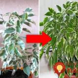 Rada, ako vzkriesiť izbové rastliny: Ak nekvitnú a chradnú vám pred očami, vyskúšajte tento trik!