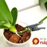 O tomto spôsobe rozmnožovania orchideí som nikdy predtým nepočula, ale skutočne funguje: Stačí, ak k rastlinke postavíte nový črepník!