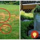 Nedarí sa vám dopestovať ukážkový trávnik? Vyskúšajte radu profíka: Záhrada bude krásne zelená, bez práce a dlho potom, čo susedom tráva uschne!