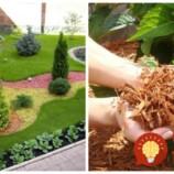 Dokáže celkom premeniť vašu záhradu a je zázrakom aj pre zdravie: Úžasné, čo všetko dokáže obyčajná kôra, ak ju viete využiť!