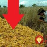 Spoločnosť na výrobu pomarančových džúsov vyviezla zvyšky z ovocia na odlesnenú pôdu: Čo našli na tomto mieste o 16 rokov neskôr je ako zázrak!