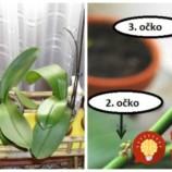 Rada, ako vždy prinútim moje orchidey zakvitnúť: Keď si všimnete toto, môžete ju začať prebúdzať, zlepšovák, ktorého sa držím už roky!