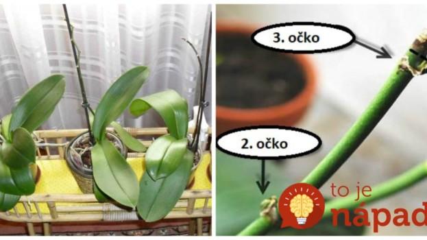 Keď si na nej všimnete toto, hneď začať prebúdzať: Najlepšia rada, prinúťiť kvitnúť aj staršiu orchideu!