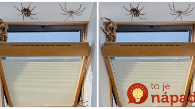 V lete mi cez otvorené okná do bytu liezli pavúky a ďalšia háveď: Namiesto drahej chémie z obchodu skúste jednoduchý trik pani Janky!