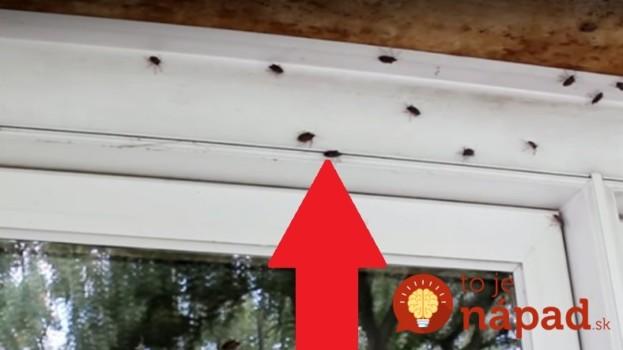 Akonáhle sa ochladí, lezú ploštice ľuďom do bytov: Keď si dáte na okná toto, budú sa pratať kade-ľahšie!