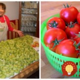 Obrali sme zelené a teraz máme krásne červené: Takto sme mali získali aj v októbri úrodu dozretých a sladučkých rajčín!