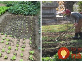 Rada záhradkára, ktorú na jar vyvážite zlatom: Vysaďte pred zimou do riadkov toto a na budúcu sezónu nebudete stíhať zberať úrodu!