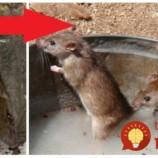 Chytil 11 myší za jedinú noc: Tento chlapík vám ukáže perfektnú pascu na myši a potkany, do ktorej pobežia samé!