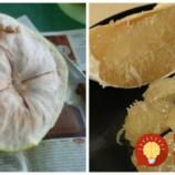 Toto ovocie má v sebe viac ako citrón a pomaranč dohromady, dokáže úžasné veci: Nikdy ho však nekupujte, ak ho uvidíte bez fólie!