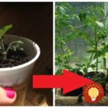 Tejto finte na pestovanie priesad som veľmi neverila, ale funguje geniálne: Už nemusíte utekať do záhradkárstva, toto je najjednoduchší spôsob!