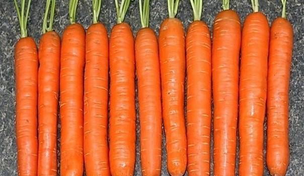 Keď idem siať mrkvu, vždy sa držím tejto rady od mojej starkej: Už roky mám takú úrodu, že mi ju chodia obdivovať všetci susedia!