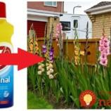 Všetci vieme, čo dokáže Savo v domácnosti: Toto je geniálny trik skúsených záhradkárov, prečo ho nedáte z ruky ani v záhrade!