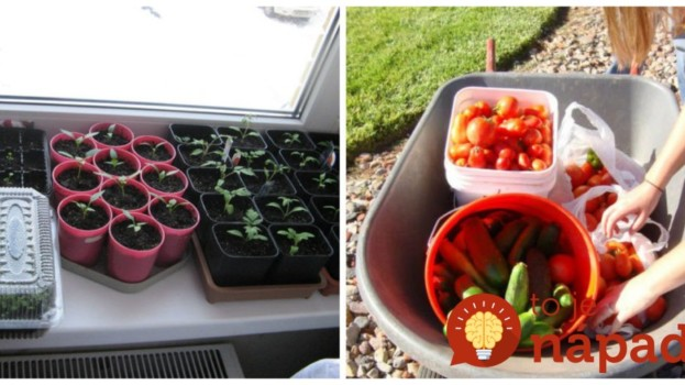 Držte sa tohoto a úrodu budete rátať na kilá: Záhradkári dali dokopy podrobný zoznam najlepších dní na vysadenie zeleniny!