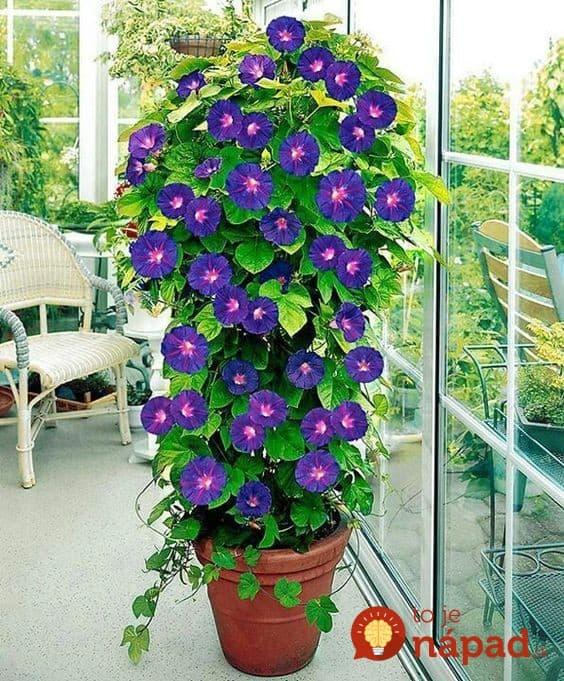 21 asn ch n padov pre pop nav kvety aj zeleninu v for Bakker piante perenni
