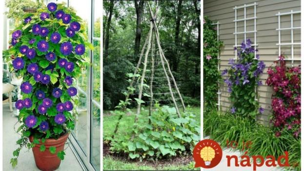 21 úžasných nápadov pre popínavé kvety aj zeleninu v záhrade: Takto budú najkrajšou ozdobou vašej záhrady!