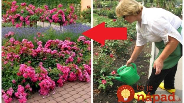 S týmto zázrakom mi ruže kvitnú ako o závod až do jesene: Najúčinnejšie hnojivo máte celý čas pod nosom, je úplne zadarmo!