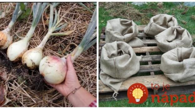 Títo ľudia nemusia riešiť okopávanie, burinu ani škodcov v záhrade: Perfektné nápady, ktoré vám poriadne uľahčia prácu!