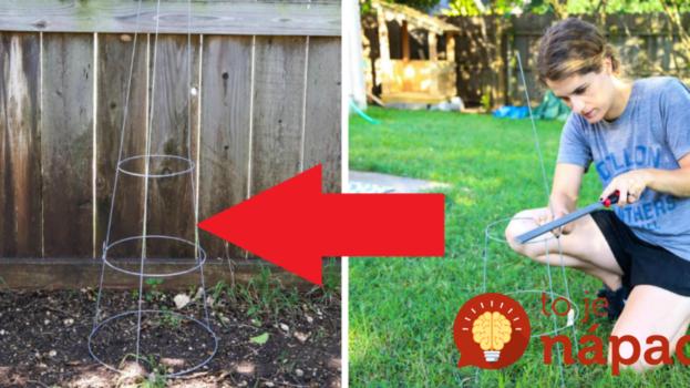 Na záhradu priniesla lacnú oporu na rajčiny a kliešte: Nepoužila ju však na pestovanie, takto perfektne si môžete vylepšiť svoju záhradu aj vy!