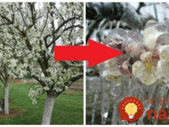 Starodávny trik, ako ochrániť rozkvitnuté stromy pred jarnými mrazmi a výkyvmi teplôt: Toto by mal vedieť každý záhradkár!