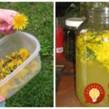 Púpavovú limonádu by mala dopriať každá žena: Perfektná na chudnutie, osvieži a prečistí vám pečeň!