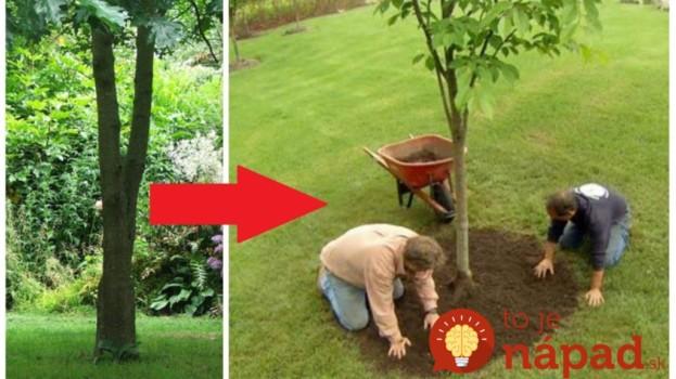 Toto radí všetkým, ktorí majú na záhrade strom: Záhradný architekt ukázal úžasné nápady, ktoré celkom premenia vašu záhradu!