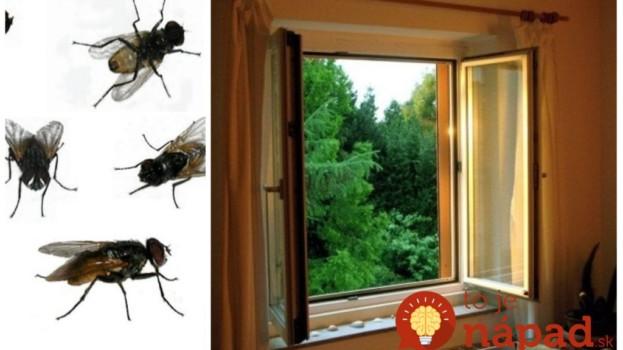Toto radím každému proti nenávideným muchám: Na oknách nemám ani sieťky a pokoj celé leto!