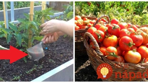 Čítala som, že takto kŕmia rajčiny v Maďarsku, aby hojne zarodili a mali lepšiu chuť: Skúsila som minulý rok a naozaj to funguje!