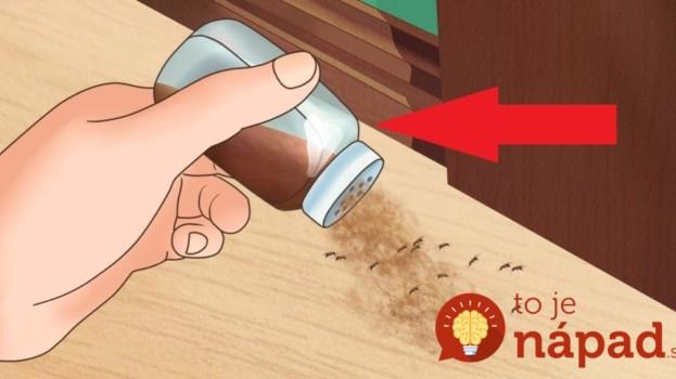 Pavúky a všetku háveď to vyženie z vášho domu: Najlepšia rada, ako udržať byt bez hmyzu a myší na celé mesiace!