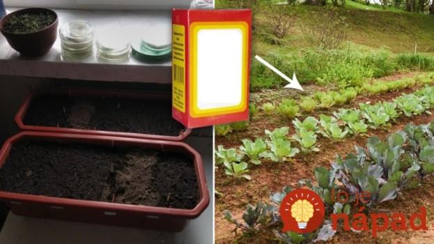 Také zázraky dokáže lacná sóda v záhrade: Len ju nasypte na pôdu, alebo pridajte ku kvetom – neuveríte, čo dokáže!
