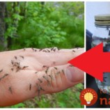 Myslela som, že odplaší len komáre, ale funguje aj na kliešte: Môj zázračný repelent proti letnej hávedi – odskúšaný!