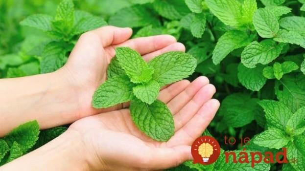 Nepridávajte ju len do čaju: Najlepšia bylinka na chudnutie a pre zdravé srdce, cievy a pokožku – všímať by si ju mali hlavne ženy!!