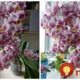 Keď idem zalievať orchideu, vždy sa držím tejto rady pani kvetinárky: Už roky kvitnú tak, že mi ich chodia obdivovať všetci susedia!