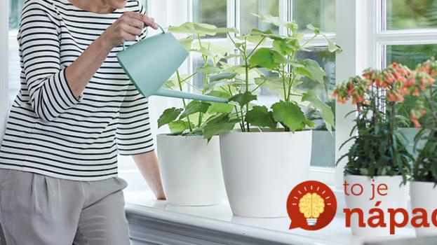 S týmito rastlinami bude váš domov voňavou oázou: Výber tých najvoňavejších izboviek!