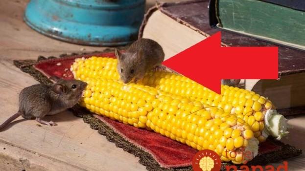 Hneď ako sa ochladilo, začali mi do domu liezť myši: Toto mi poradil švagor a myši sa pratali ako namydlený blesk!