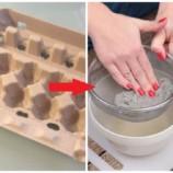 Táto žena kartóny od vajec len natrhala a zaliala vodou: Neverili by sme, čo z toho vzniklo o pár hodín – perfektný nápad úplne zadarmo!