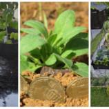 Toto vám v obchode nepovedia: 10 neoceniteľných trikov do záhrady, ktoré nič nestoja, ale perfektne fungujú!