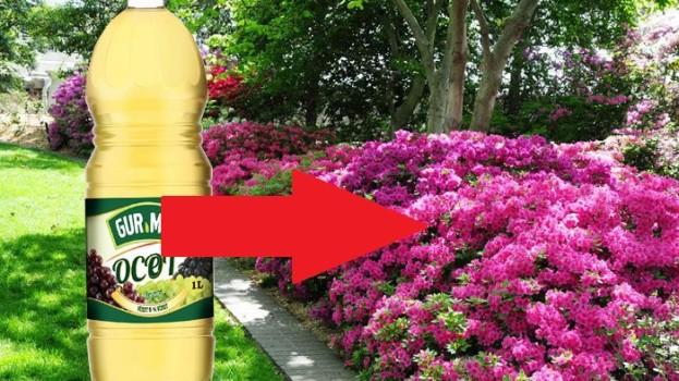 Od tohto momentu je lacný ocot v mojej záhrade považovaný za poklad: 21 trikov, ktoré ušetria kopec peňazí aj námahy!