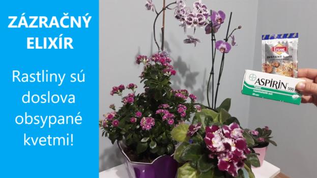 Izbovky obsypané kvetmi sú snom každého pestovateľa: Pridajte im do vody tieto dve prísady a budú kvitnúť ako divé!