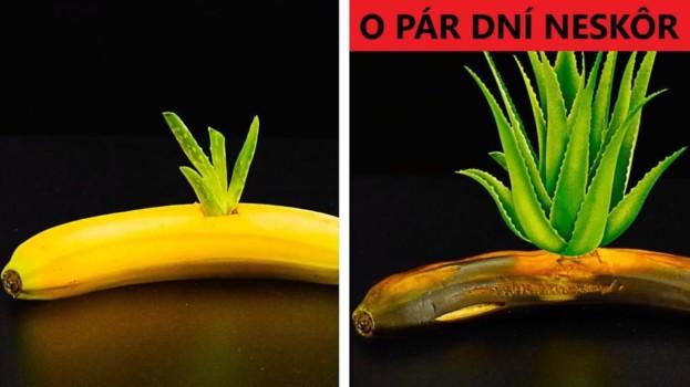 S týmito trikmi bude pestovanie hračka: Neuveríte, čo všetko si môžete doma vypestovať takmer bez námahy!