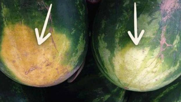 Ak chcete vybrať vynikajúci melón, nemusíte naň klopkať: 4 tipy od poľnohospodára – stačí jeden pohľad a hneď viete, ktorý kúpiť!