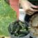 Prírodné hnojivo na uhorky, ktoré zabraňuje žltnutie listov: Záhradkári, vezmite to na vedomie!